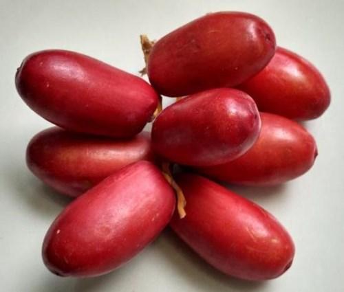 jual kurma muda warna merah