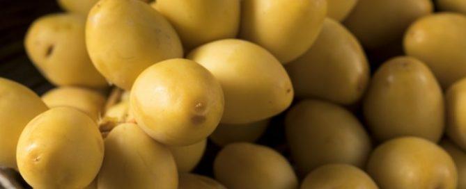 manfaat kurma muda warna kuning