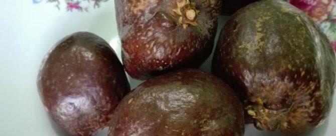 Khasiat buah zuriat