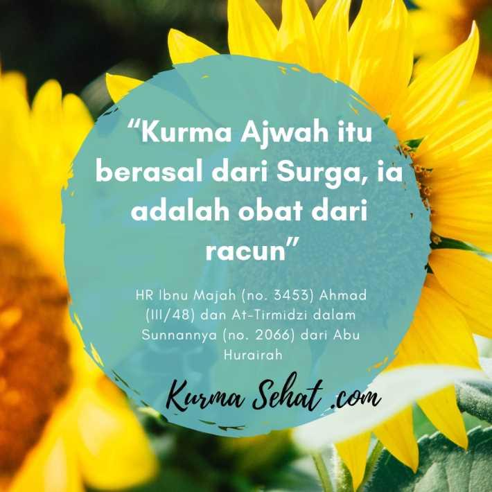 Kurma Ajwa dari surga