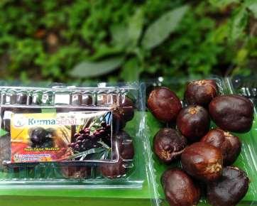 buah zuriat madinah 500 gr